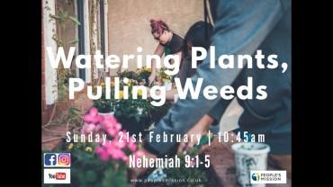 Watering Plants, Pulling Weeds
